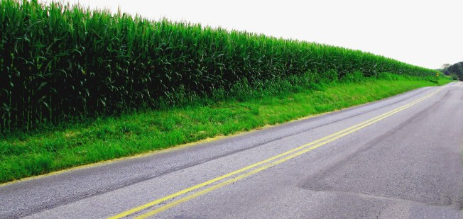 Corn-Field-Along-Line-Road